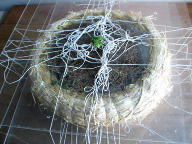 Trapped Plants - Working Wreaths